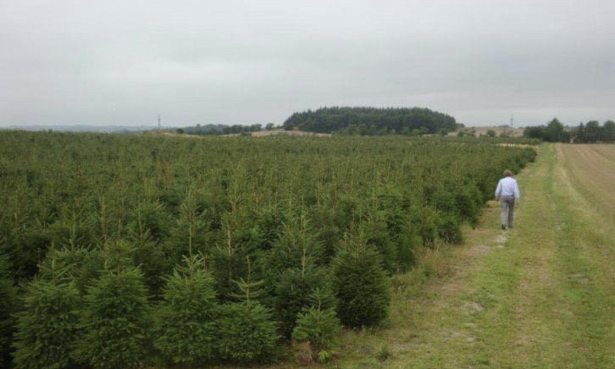 Kerstbomen Makker